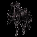 Riding Horse Selle Français Black