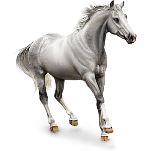 Riding pegasus Lusitano Light Gray