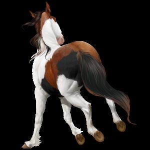 Pony Quarter Pony Bay Tobiano