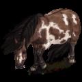 Pony Shetland Dark Bay