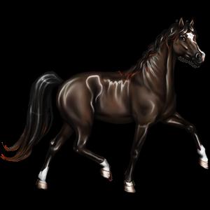Riding Horse Thoroughbred Dark Bay