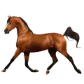 Riding Horse Knabstrupper Chestnut Snowflake