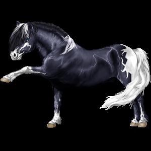 Pony Shetlander Zwart