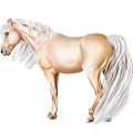 Riding Horse Icelandic horse Light Grey