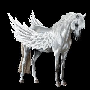 Pegasus Lusitano Gulbrun
