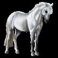 סוס פוני קונמארה אפור בהיר