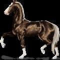 Riding Horse Marwari Flaxen Liver chestnut