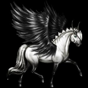 Winged unicorn pony  Welsh Dun
