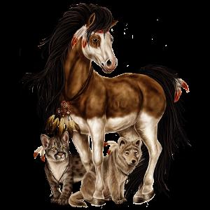 Pony Neufundland Pony Rappe