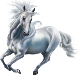 Jezdecký pegas Argentinský kreolský kůň Myšák