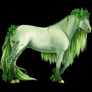 Koń wierzchowy Pinto Izabelowata Tovero
