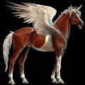 Winged riding unicorn Brumby Roan