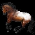 סוס פוני שטלנד אפור בהיר