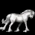 Pony Haflinger Zweetvos kastanje