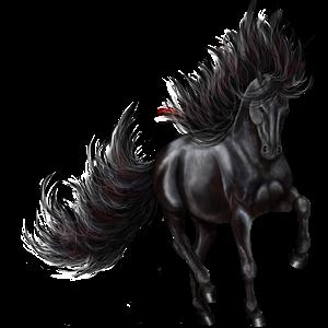 Riding Horse Canadian Horse Black