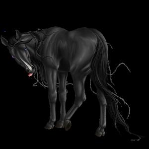 Koń wierzchowy Koń luzytański Siwa Jabłkowita