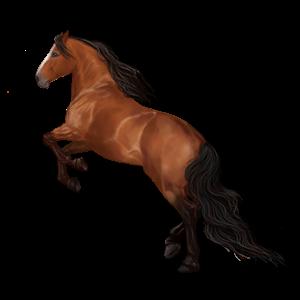 Riding Horse Mustang Cherry bay