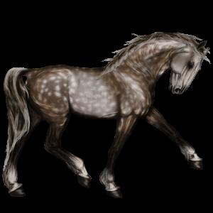 Riding Horse Lusitano Dun