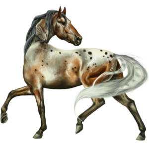 Riding Horse Appaloosa Dun Spotted Blanket
