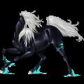 Riding Horse Shagya Arabian Light Gray