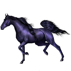 حصان ركوب حصان عربي  كستنائي كتاني