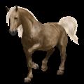 Cavalo de passeio Quarto de Milha Alazão