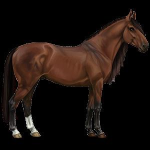 Cavalo de passeio Holstein Alazão