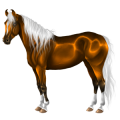 Riding Horse Argentinean Criollo Dark Bay