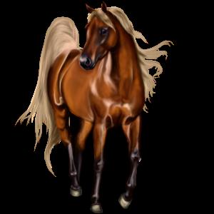 Riding Horse Arabian Horse Chestnut