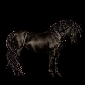 Pony Highland Pony Mouse Grey