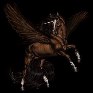 Winged riding unicorn Marwari Dark Bay