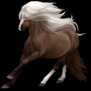 Pony Shetlander Bruin