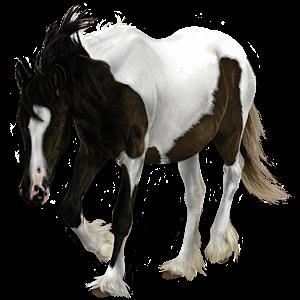 Cavalo de passeio Lusitano Tordilho negro