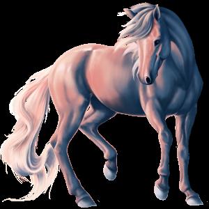 Cavalo de passeio Quarto de Milha Branco