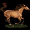 Riding Horse Thoroughbred Dun