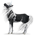 Unicorn Australian Pony Black