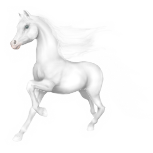 Riding Horse Thoroughbred Light Grey