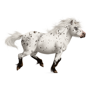 Pony Shetland Light Gray