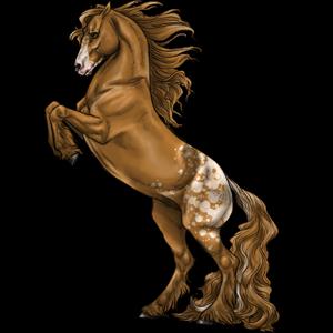 Pony Shetlander Roan