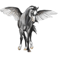 Riding pegasus Barb Dapple Gray