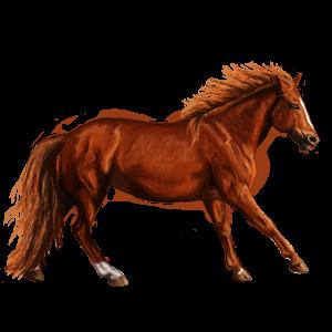 Pony Australian Pony Chestnut