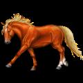 Cheval de selle Mustang Bai Brûlé
