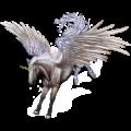 Winged unicorn pony  Australian Pony Black