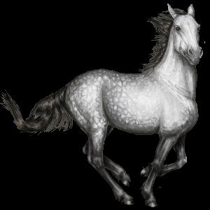 Cheval de selle Quarter Horse Noir