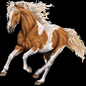 Pégase de selle Mustang Blanket Isabelle
