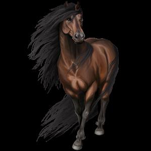 Riding pegasus Mustang Liver chestnut Spotted Blanket