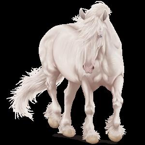 Pégaso de passeio Cavalo Árabe Alazão tostado crinalvo