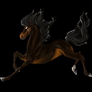 Pony Belgian Riding Pony Liver chestnut