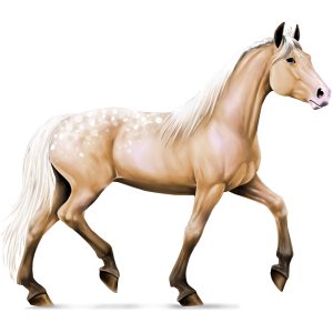 Riding Horse Appaloosa Palomino Spotted Blanket