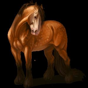 Cavalo de passeio Gypsy Vanner Tobiano castanho